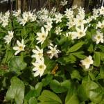 Wiosna w parku uzdrowiskowym