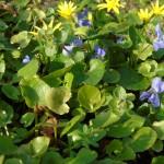 Wiosna w parku uzdrowiskowym / fot. DK