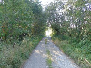 ul. Koszutki - Via Regia