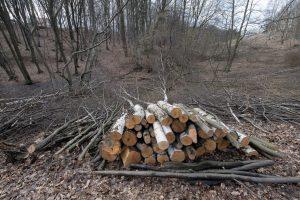 Zdjęcia wyciętego lasu w Rajsku / fot. arch. autora