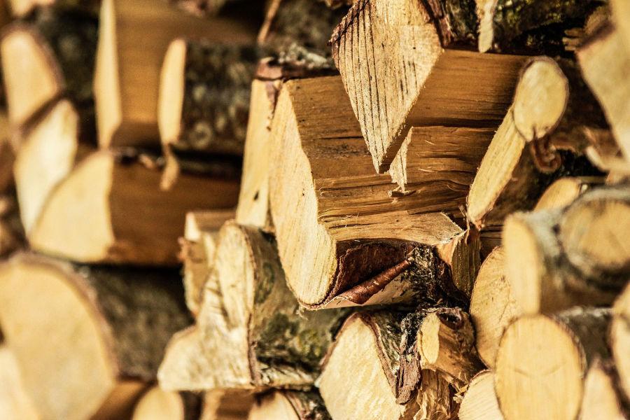 Zmiany prawne dotyczące wycinek drzew