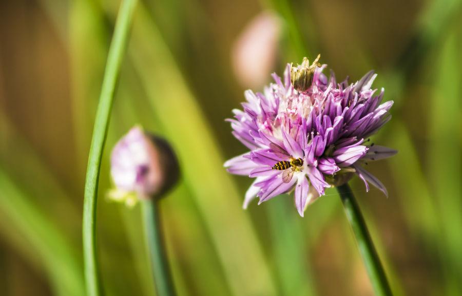 Łąka kwietna w obiektywie – weź udział w konkursie