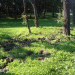 Dziki w Parku Maćka i Doroty / fot. Czytelnik SPI