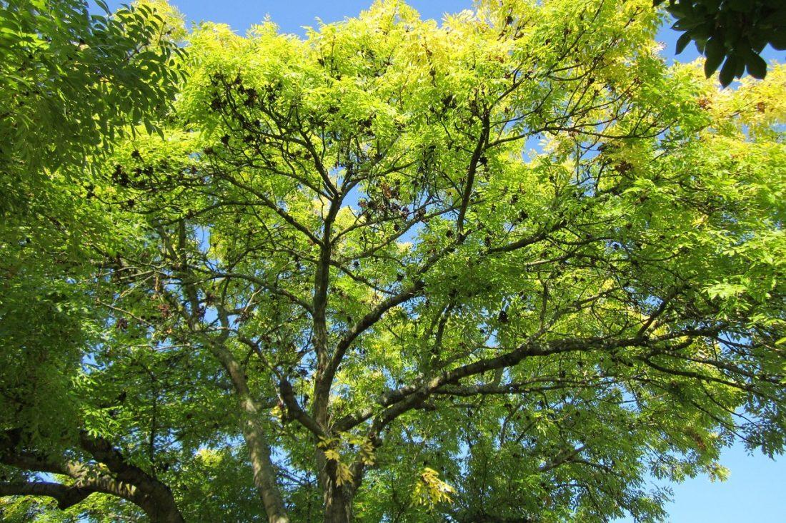 Drzewa pomnikami przyrody