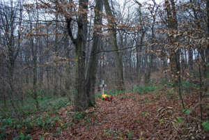 Cmentarz wojskowy we Wróblowicach. Stan obecny / fot. archiwum prywatne Dominika Galasa